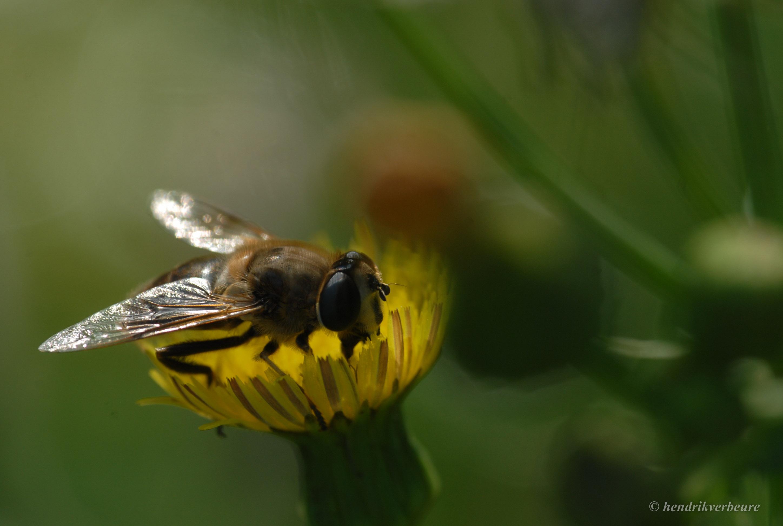 biologisch_een eeuw bio