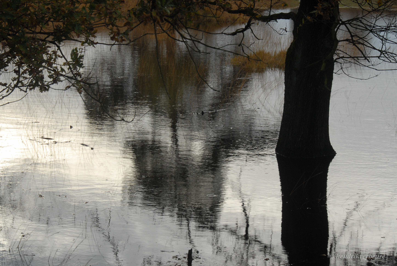biologisch_pesticiden en watervervuiling