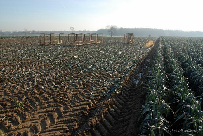 landbouw-005_695_467_72