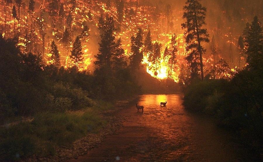Bosbrand Siberië