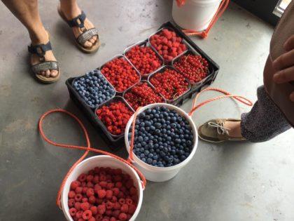 Japanse wijnbes, framboos, blauwe bes en rode bes